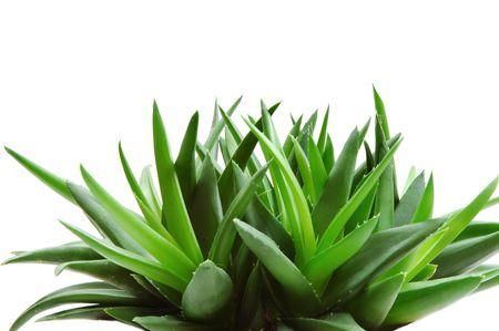 Aloe Stock Photo - 328784