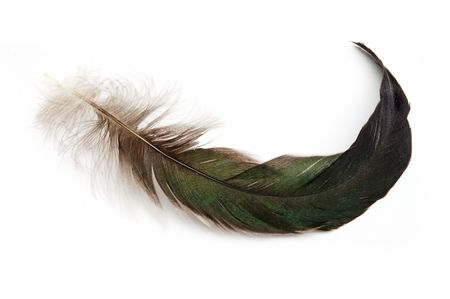 Feather photo