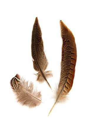 Feathers Stock Photo - 328775