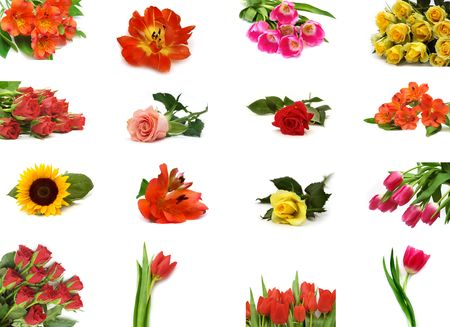 Isolated flower collection Stock Photo