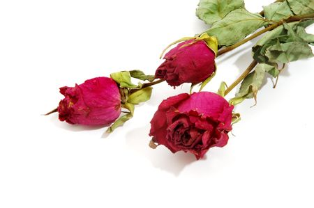 recollection: Dried roses Stock Photo