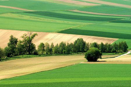 spaciousness: Green fields. Germany