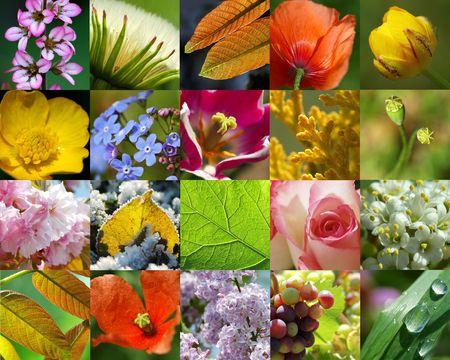Nature in macro-2 Stock Photo - 409301