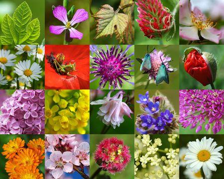 Nature in macro-3 Stock Photo