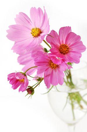 Pink daisies photo