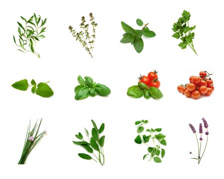 Herb collection Stock Photo - 499485