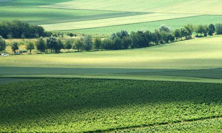 spaciousness: Green landscape