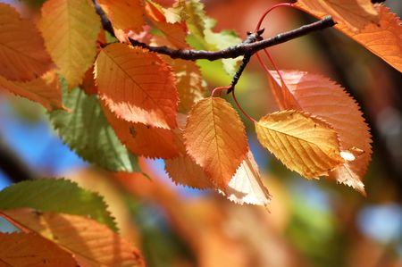 Autumn leaves Stock Photo - 557983