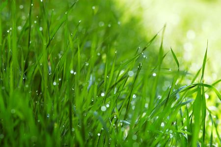 Grass with dew drops photo