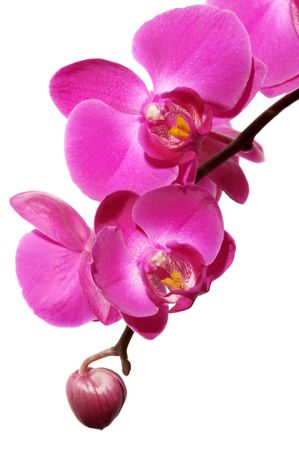 Orchid Stock Photo - 644974