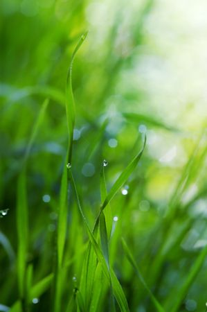 Green grass withe dew drops Stock Photo - 682711