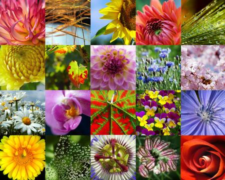 Nature in macro photo