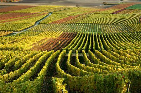 Vineyards. The Rhine Valley Germany Stock Photo