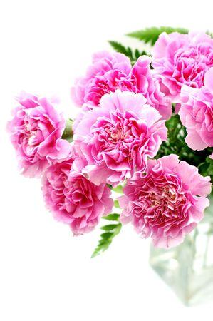 Carnations in vase Stock Photo