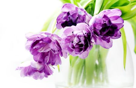 Lilac tulips bouquet in vase Stock Photo