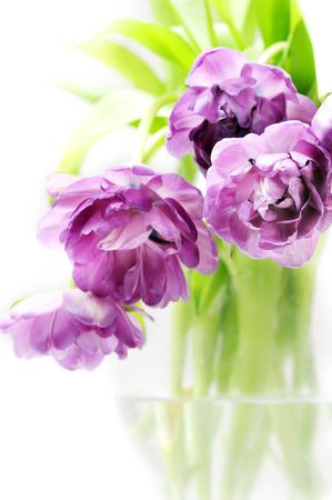 Lilac tulips in vase