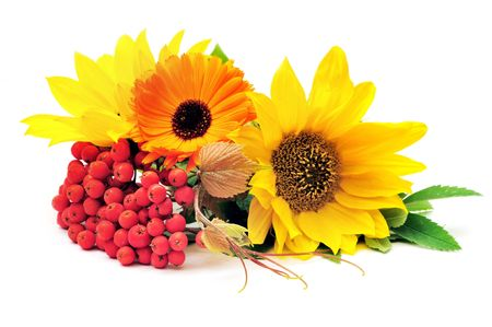 ashberry: Sunflowers and ashberry