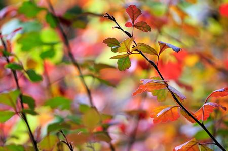 Autumn leaves background Stock Photo - 3723066