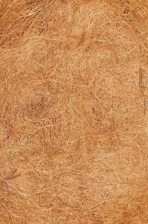 fibrous: Coconut texture Stock Photo