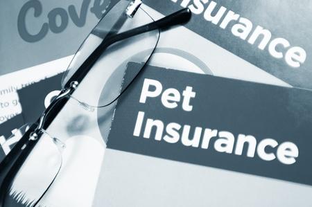 flier: Pet insurance