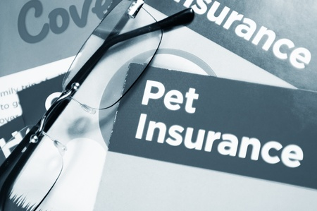 insure: Pet insurance
