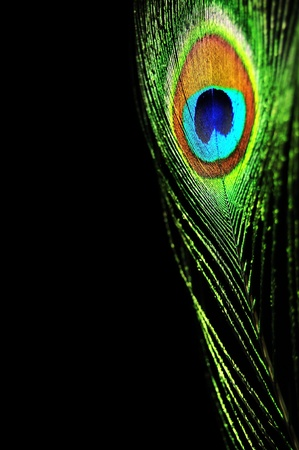 Peacock feather Stock Photo - 10474807
