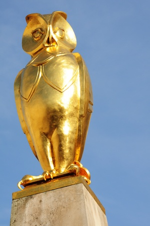 wise old owl: Golden owl  Stock Photo