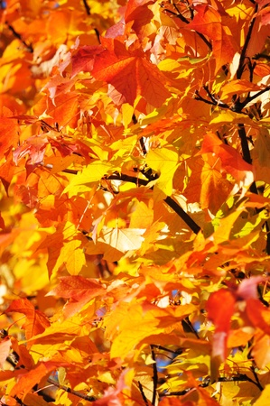 Autumn Stock Photo - 10554714