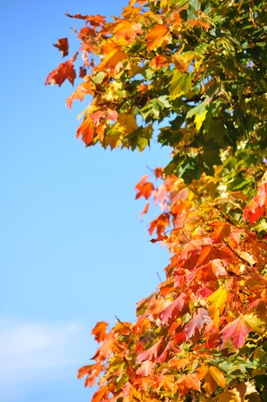 Abstract autumn background Stock Photo - 10595948
