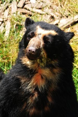 Bear Stock Photo - 10733120