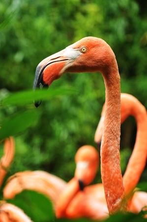preen: Flamingo