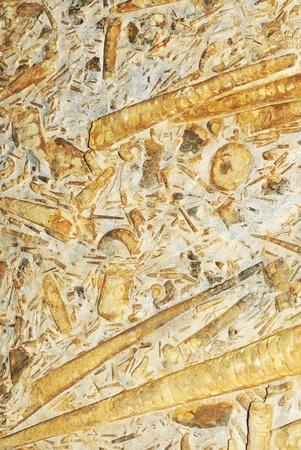 sedimentary: Prehistoric background