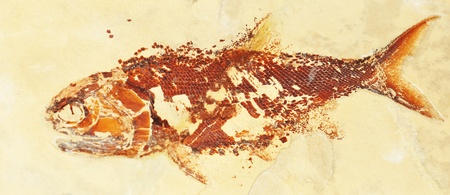 Prehistoric fish  photo