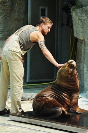 the zoo: Viena, Austria - 08 de julio de 2011: Cuidador cuidar de un lobo de mar en cautividad en el Zoo de Schonbrunn.