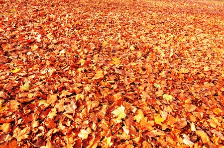 Autumn background  Stock Photo - 11935262