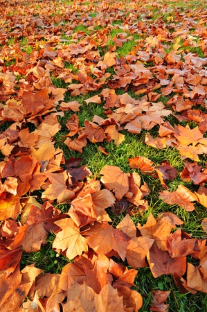 Leaves  Stock Photo - 11935260