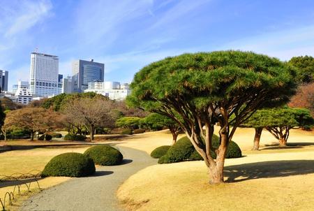 Tokyo, Japan - 28 Dec, 2011: Tokyo skyline seen from the Shinjuku Gyoen National Garden in winter  Stock Photo - 12412429