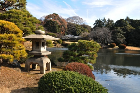 cedars: Japanese garden