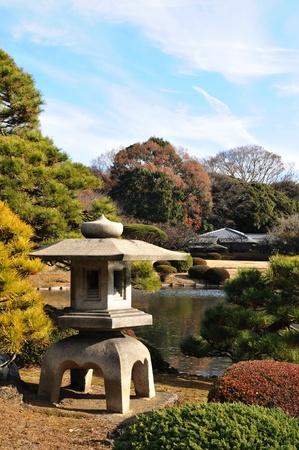 cedars: Zen garden