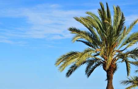 tree detail: Detail of palm tree against blue sky in Caribbean