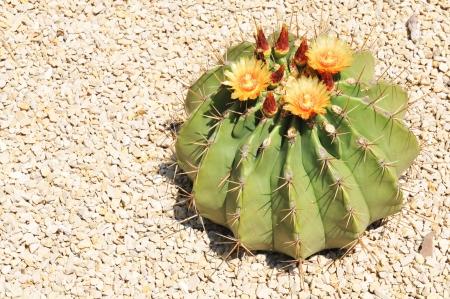 plantas del desierto: Cactus Foto de archivo
