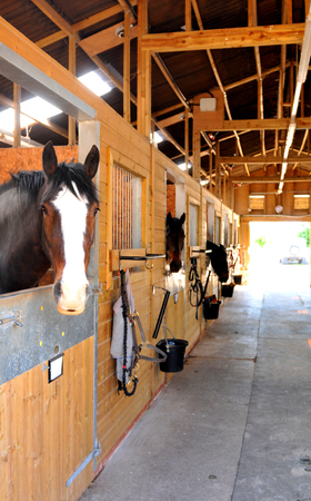 harnessing: At the stables