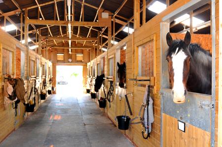 At the stables Фото со стока - 43922471