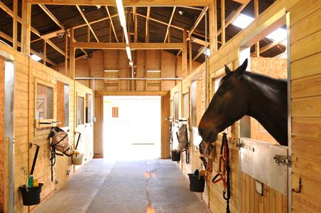 厩舎の馬の肖像