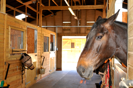 Portrait of a horse in the stables