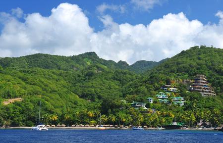 pythons: Tropical island