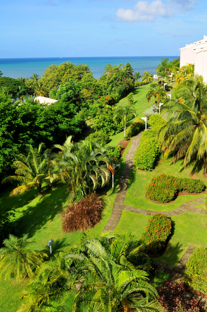 saint lucia: Aerial view of exotic garden Stock Photo