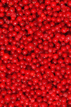 ribes: Red currants or redcurrants Ribes rubrum background Stock Photo