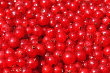 ribes: Red currant or redcurrant Ribes rubrum background Stock Photo