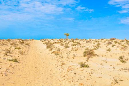 View of desert in Boa Vista, Cape Verde, Africa